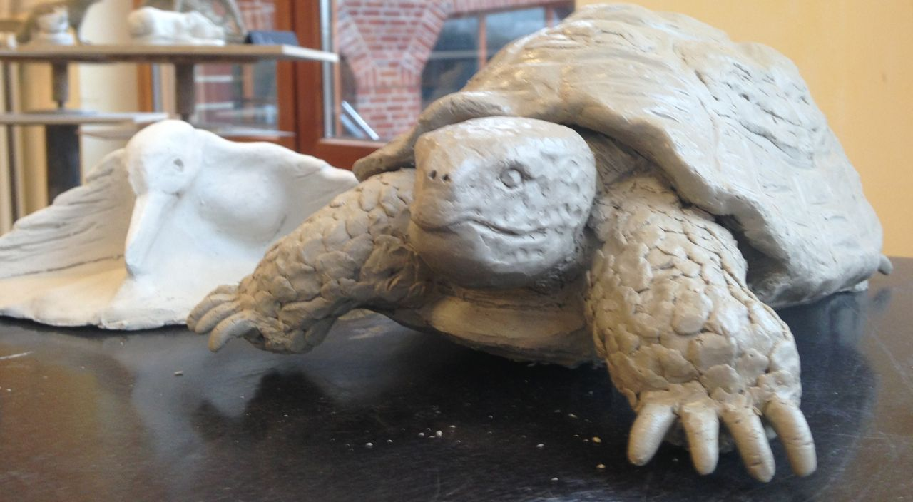 Schildkröte1.jpg