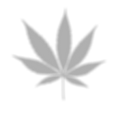 cannabis_edited_edited_edited_edited_edi