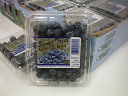 Blueberries Clam Shell