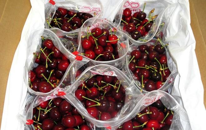 Cherries in bags