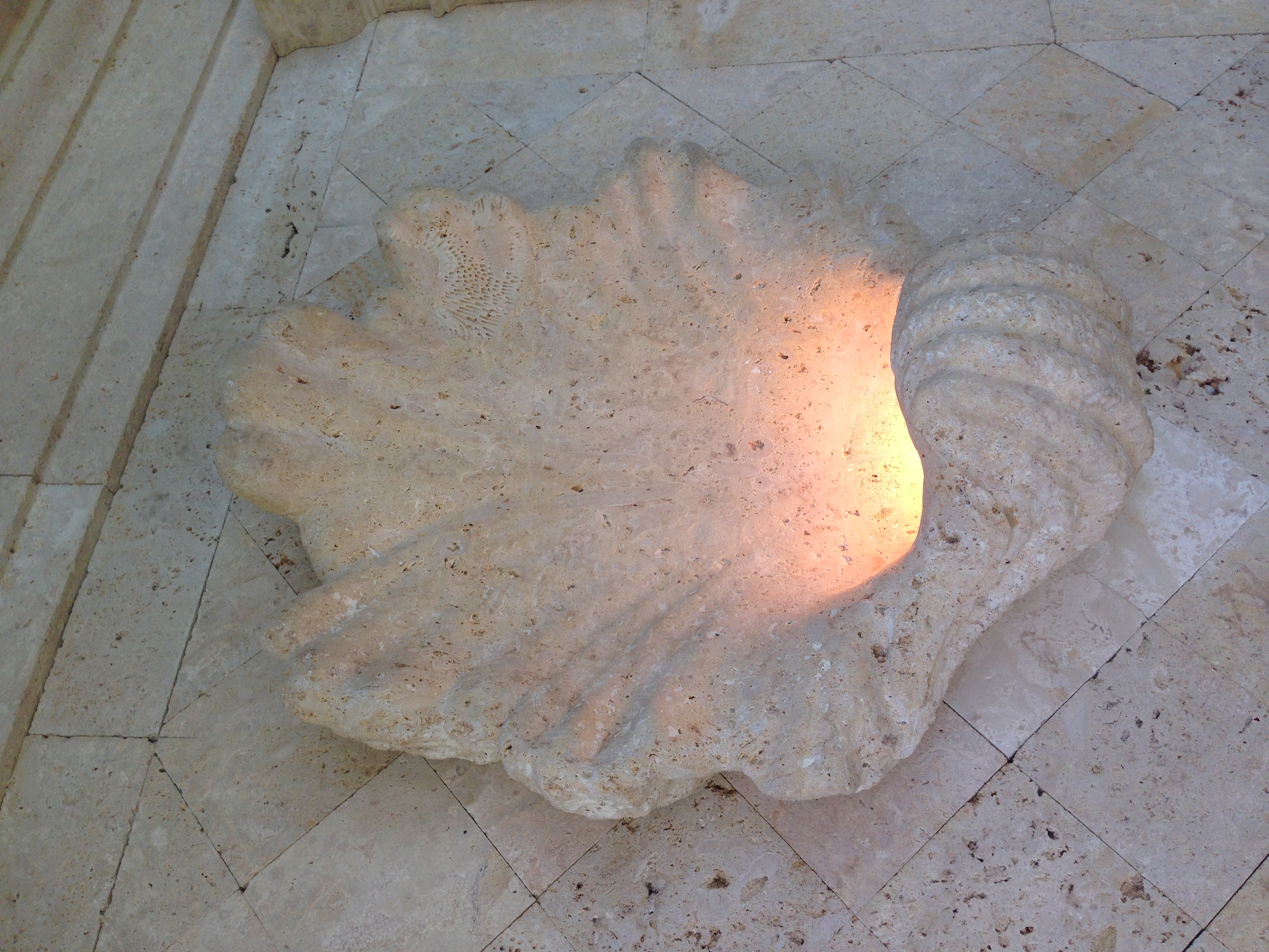 Coralite - Sconce