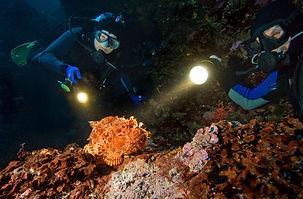 divers_illuminate_scorpionfish_while_nig