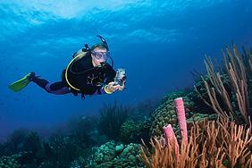 curso mergulho sp, curso mergulho são paulo