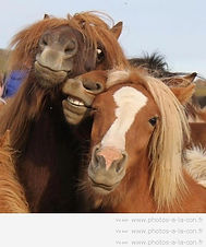 image-drole-cheval.jpg