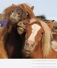 bien etre animal poney