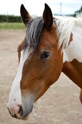 paloma cheval