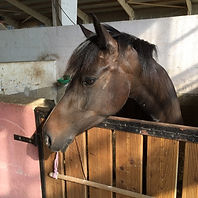bruni cheval