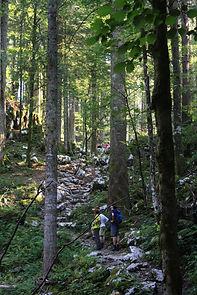 Golubinjak park suma, forrest park Golubinjak,  hiking, mountain biking