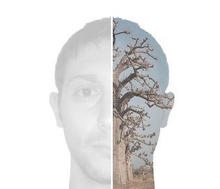 Photo baobab2 MN_NB.jpg