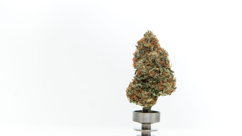 Cannabis Promo Shoot