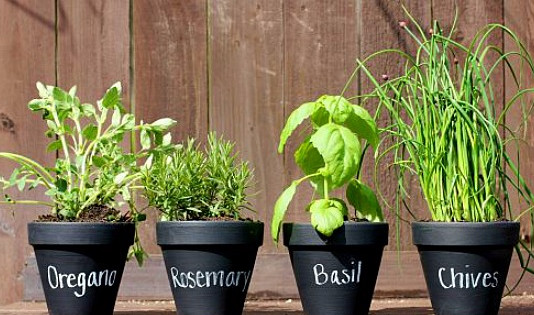 Planting your own herbs