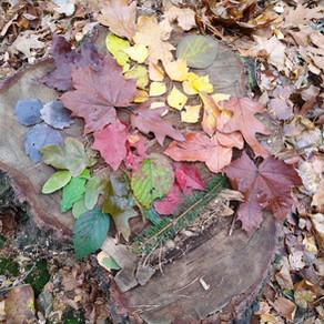Farben sammeln - NATUR ENTDECKEN mit Kindern