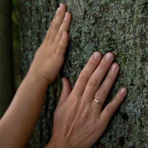 Einem Baum begegnen - NATUR ENTDECKEN mit Kindern