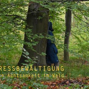 Terminänderung: Stressbewältigung durch Achtsamkeit im Wald