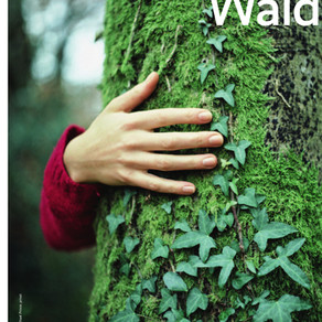 Presse: AOK September 2019 - Wald tut gut