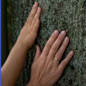 FORTBILDUNG: Grüne Faszination - Achtsamkeit mit Kindern in der Natur
