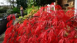 sony garden and plant 249.JPG