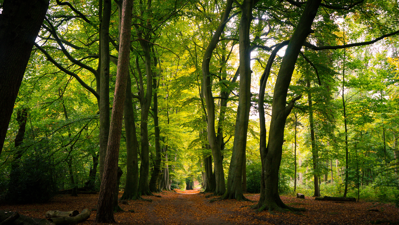 path woods