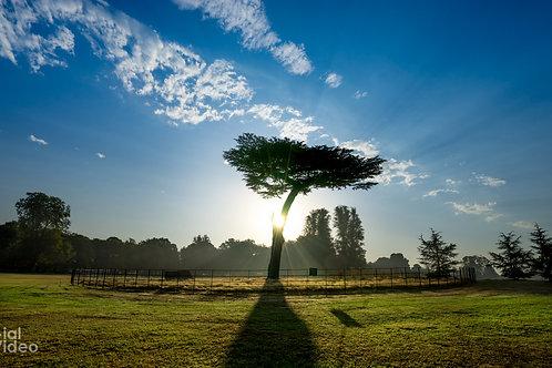 Morning Sun, Cassiobury Park