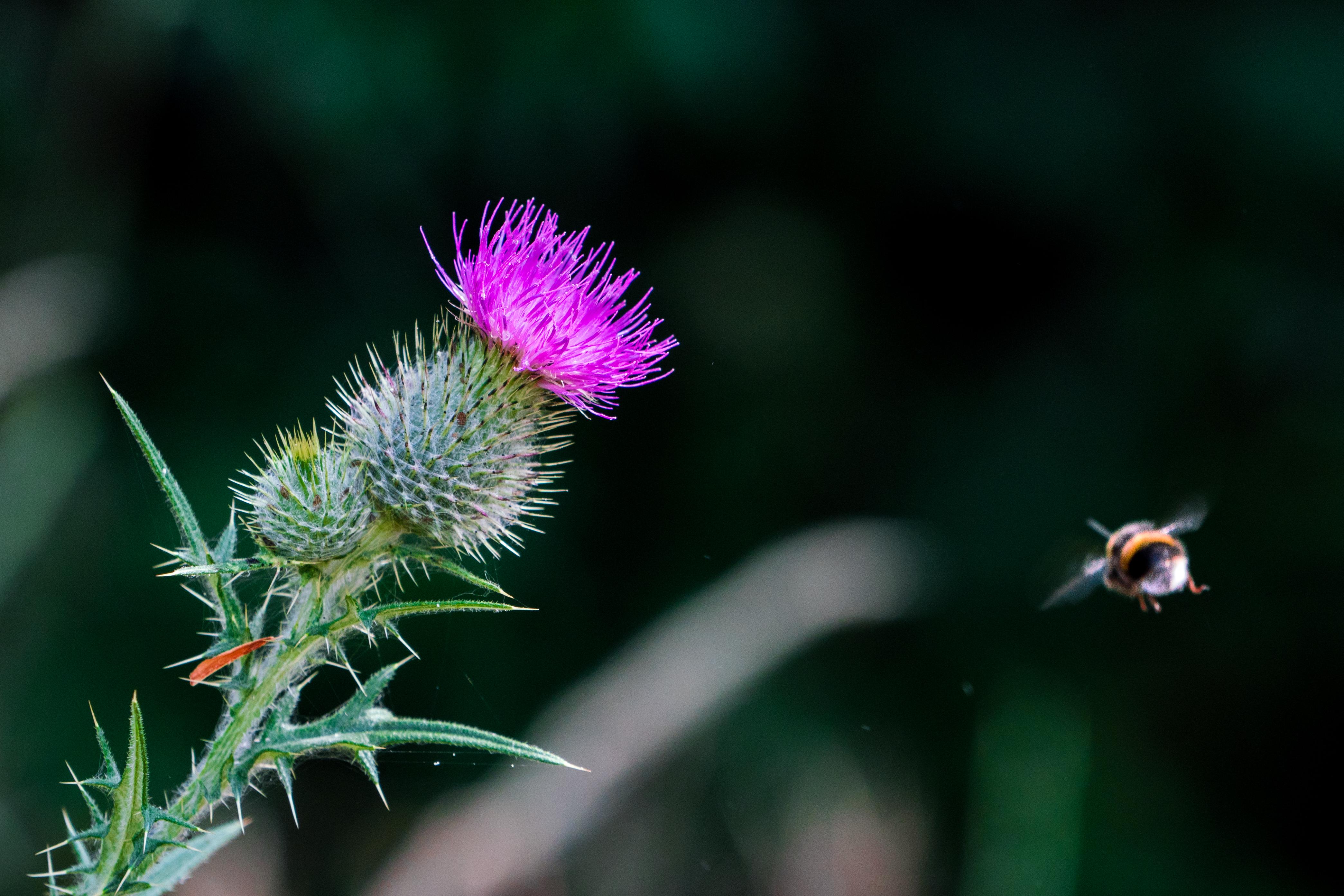 Inbound bee.