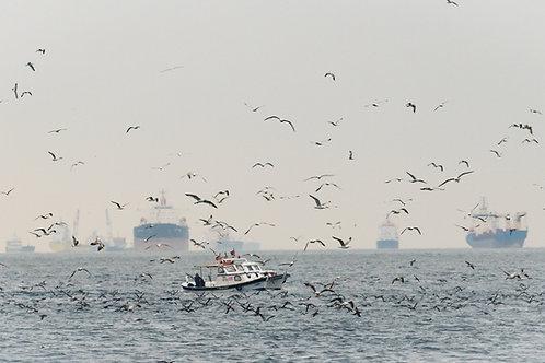 Gulls, Bosphorus