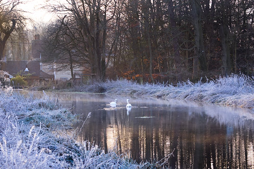 River Chess Frosty Swans