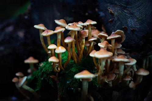 Mushrooms, Chipperfield Woods