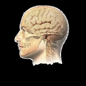 Nevrokirurgi.png