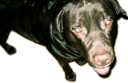 Dogge.png
