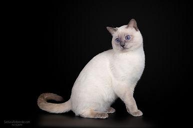 """Всемирная выставка кошек """"Мир кошек"""""""