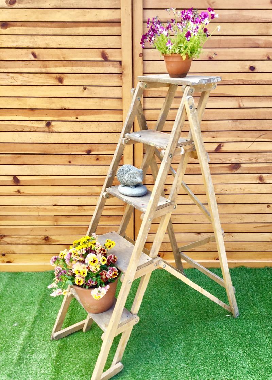 Skelton Ladder