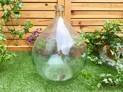 Wine bottle carboy 1950年代