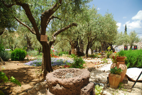 Garden of GethsemaneGarden of Gethsemane