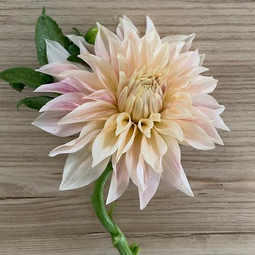 Bloom Bunch