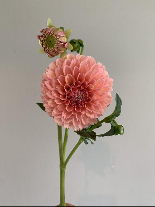 4 Week Flower Subscription