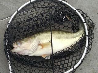 February Fishing Report