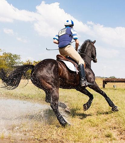 cheval-sport-acupuncture.jpg