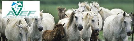 vétérinaire-équin-AVEF.jpg