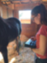 acupuncture-vétérinaire-electroacupuncture-cheval.JPG