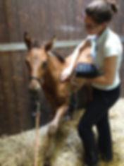 Acupuncture équine en Normandie