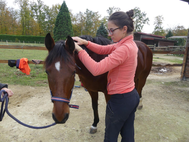 Massage équin - Tuina