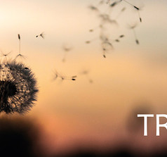 Trivs - Cover
