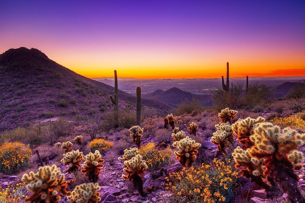 Our Arizona Desert
