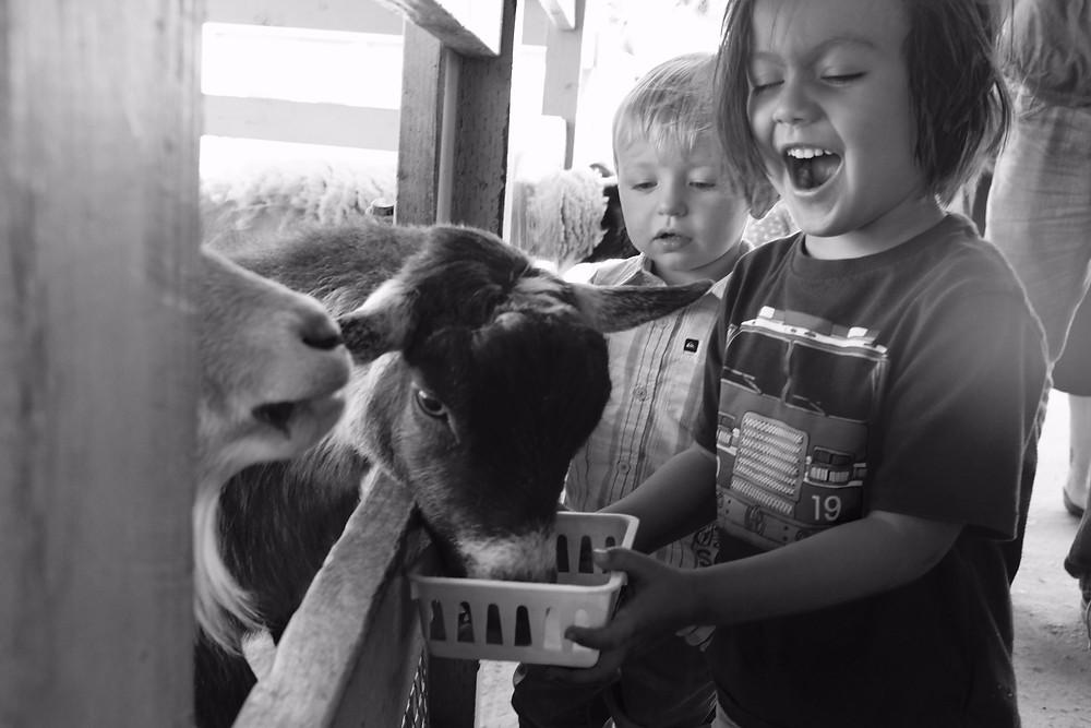 San Juan Capistrano petting zoo