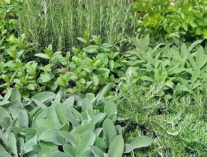 plantes-Aromatiques.jpg