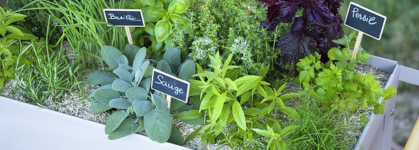 potager-plantes-aromatiques-v1.jpg