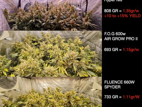 Test floraison CBD avec led                     ( GREEN MIND SA SUISSE )