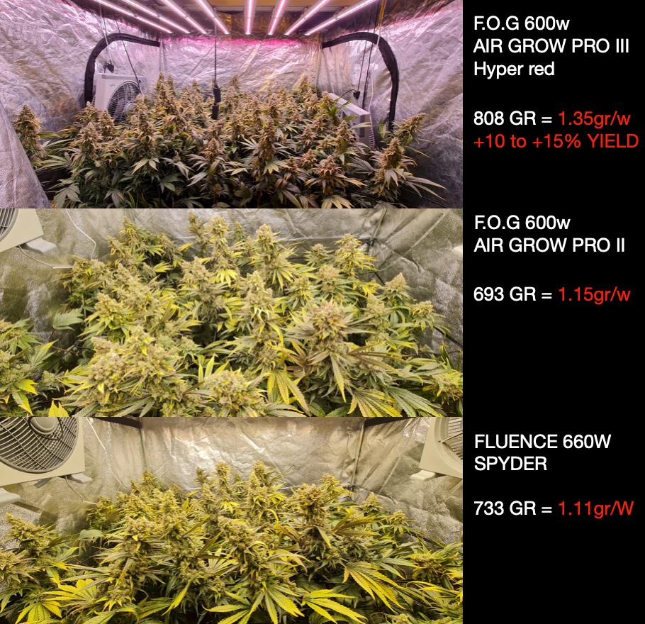 Test avec luminaire led sur cannabis CBD