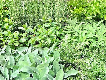 plantes-Aromatiques_edited.jpg