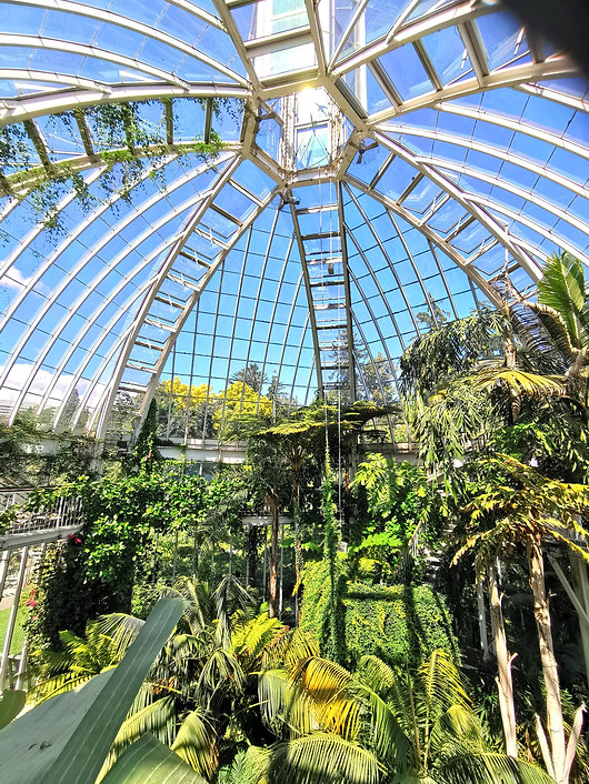 optimisation lumineuse au Jardin botanique de Genève, luminaires led horticole F.O.G the futur of grow X-VEG 200w, grow light, led grow light,
